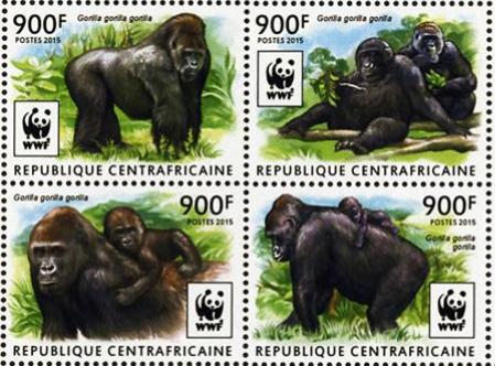 Le gorille est le jardinier de la forêt
